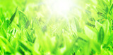 新緑のアップと太陽