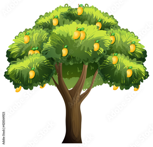 Yellow mango tree isolated on white background