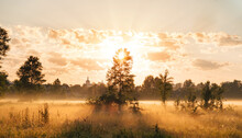 Yellow Sunrise In Morning Forest Nature View. The Sun's Rays Penetrate Through The Trees And Morning Fog.