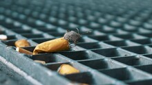 Insect And Cigarette End