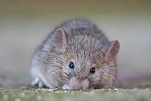 Mysz Z Bliska