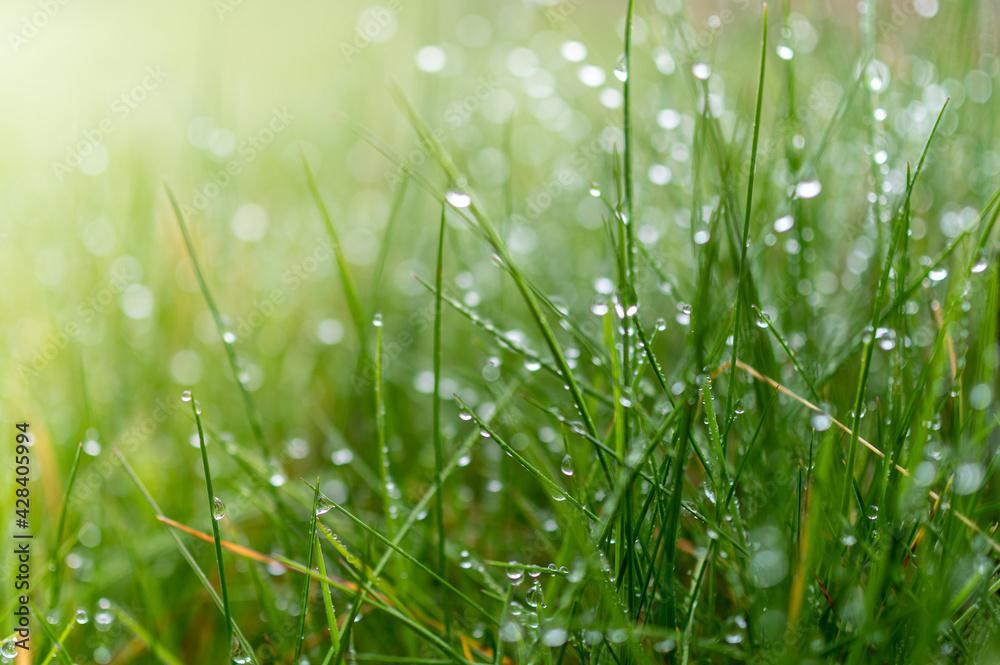 Fototapeta soczysta zielona trawa z kropelkami deszczu