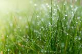 Fototapeta Łazienka - soczysta zielona trawa z kropelkami deszczu