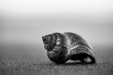 Soft Focus Of An Empty Exotic Snail Shell On The Ground
