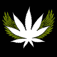 Vector Illustration Of A Cannabis Leaf With Two Open Wings. Design For Posters, Stickers Or T-shirts.