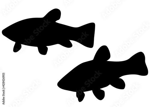 Fotografia, Obraz River fish tench in the set. Vector image.