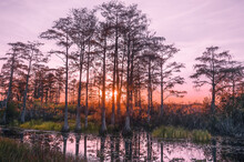 Purple And Pink Grunge Sunset In The Swamp