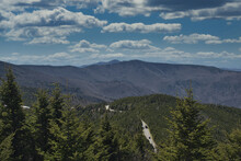 Beautiful View Of Pine Trees In The  Mount Mitchell State Park Murchison, USA