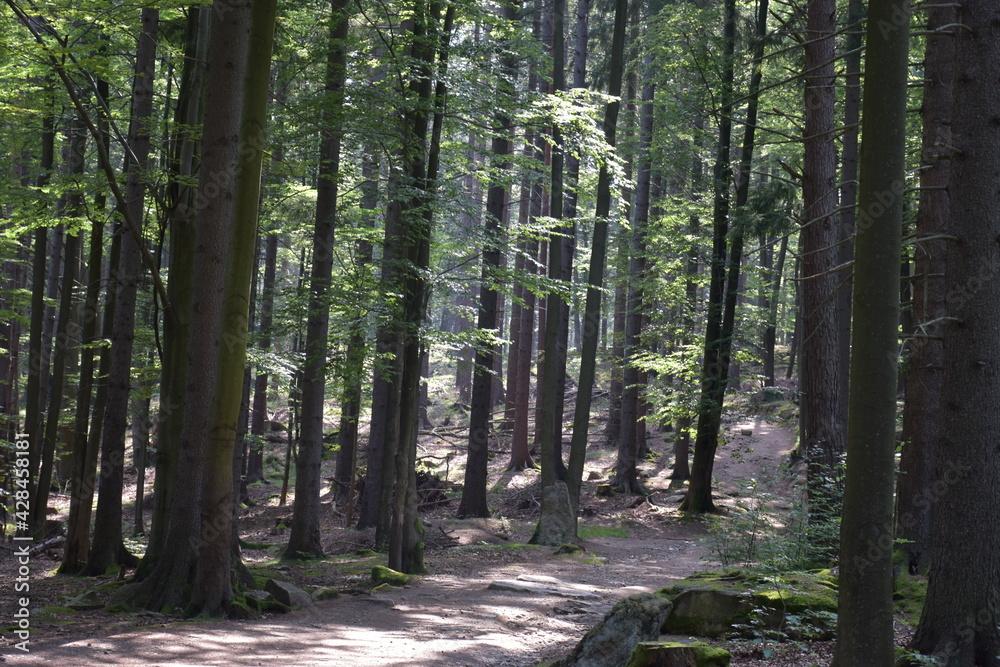 Fototapeta piękny górski las porośnięty drzewami liściastymi