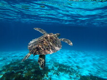 Okinawa's Blue Sea And Blue Sky Turtles I Met In The Kerama Islands