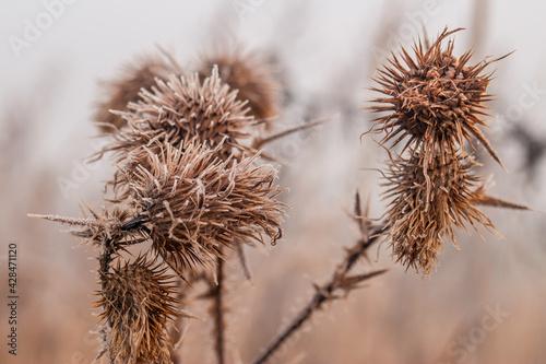 Fototapeta szron i roślina 2 obraz