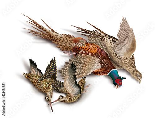 Fényképezés oiseau, bécasse des bois, faisans, nature morte, la chasse, en vol, tiré, nature