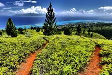Trail Au Dessus De Tahiti Et Moorea