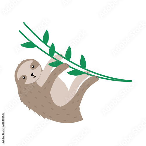 Fototapeta premium sloth exotic animal
