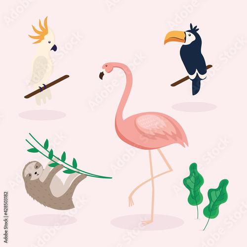 Fototapeta premium four tropical animals