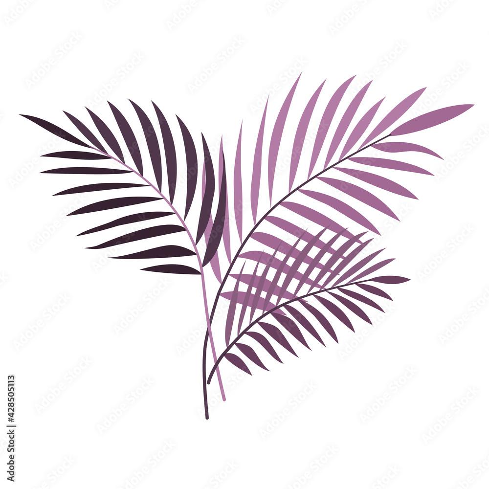 Fototapeta Egzotyczne palmowe liście w odcieniach fioletu. Botaniczna ilustracja tropikalnej rośliny na białym tle.