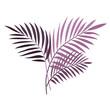 Egzotyczne palmowe liście w odcieniach fioletu. Botaniczna ilustracja tropikalnej rośliny na białym tle.