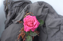Single Bright Pink Rose, Resting On A Women's Grey Jacket. Looking Down At A Fully Open Rose Placed On A Light Grey Background.
