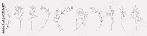 Fototapeta Hand drawn herbs. Minimal floral monograms. Blooming plants and branches with leaves. Row of contour flowers. Black and white decorative elements template. Vector foliage sketch set obraz