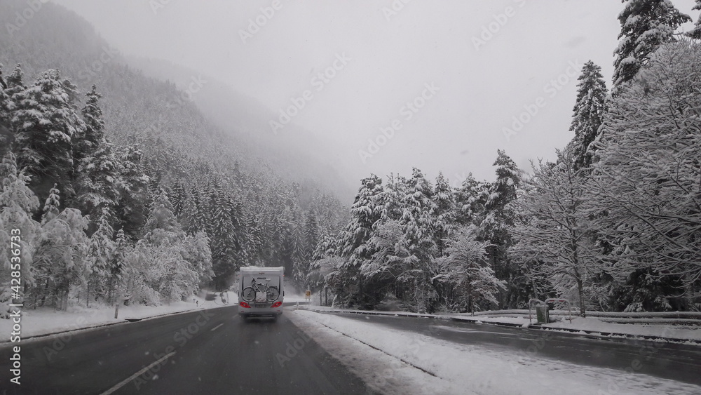Fototapeta Kwietniowy atak zimy.