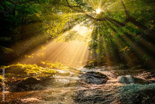 Obraz na plátně 菊池渓谷のあさの光のシャワー