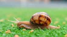 Snail On The Green Artificial Grass. Animals