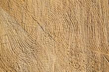 Sawn Wood Texture