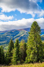 Coniferous Forest And Hills On A Background Of Mountains Blue Sky Clouds. Countryside .