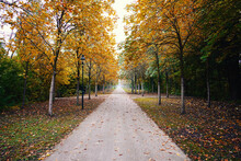 Gorgeous Park During Fall With Yellow And Green Trees Running Along Paved Street, Forming Tunnel
