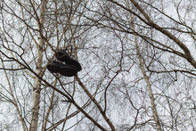 Old Shoes Hang High On The Branches Of A Tree In The Spring