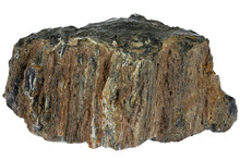 Petrified Wood From Kaiserslautern, Germany Isolated On White Background