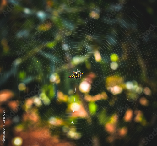 Vászonkép spider web with dew drops