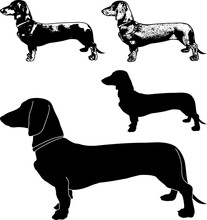 Dachshund Dog Silhouette And Sketch Illustration - Vector
