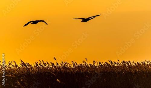 Fototapeta Birds on the Sunset obraz
