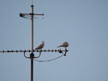 Shot Of Two Pigeons Sitting On Antenna