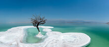 A Lonely Tree In Dead Sea. A Plant On Salt Island. Unique Landscape In The World. The Lowest Place On Earth.