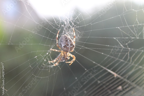Fotografering Spider weaves a web in the street on a sunny day