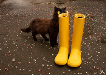 Yellow Rubber Boots And Funny Cat