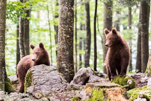 Fotografiet orsi alla scoperta del mondo 9