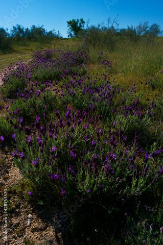 Fototapeta kwiaty rośliny flora zieleń wiosna natura obraz na płótnie