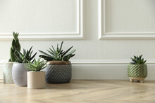 Different Potted Plants On Floor Near White Wall, Space For Text. Floral House Decor