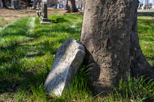 An Ancient Broken Tombstone Leaning Against A Tree