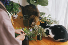 Woman In Linen Dress Arranging Flowers And Two Cats Playing And Smelling Wildflowers On Wooden Table