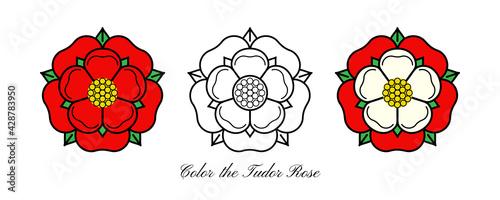 Cuadros en Lienzo Tudoe rose of Englnd vector illustration.
