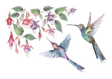 Birds Are Small Hummingbirds In Flight With Outstretched Wings, Pink Fuchsia Flowers And Buds With Green Leaves. Watercolor For Design Of Cards, Invitations, Print, Background, Cover, Banner.