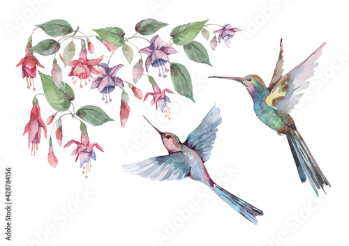 Fototapeta   Birds are small hummingbirds in flight with outstretched wings, pink fuchsia flowers and buds with green leaves. Watercolor for design of cards, invitations, print, background, cover, banner. obraz