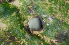 Rock Surrounded By Seagrass