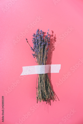 Fototapeta A bouquet of lavender is glued with white tape to a pink background. Creative fun concept in the style of minimalism. obraz