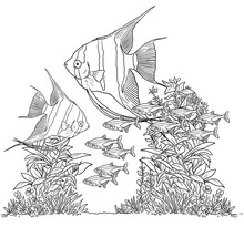Aquarium With Angelfish For Coloring. Pterophyllum Fish And Neon Tetra Templates. Coloring Book For Children And Adults.