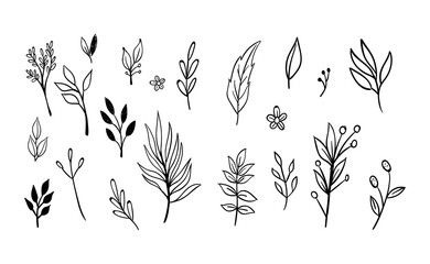 Hand drawn floral elements. Swirls, laurels, arrows, leaves, flowers and branches. Doodle botanical elements.